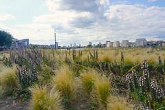 London_0480 (O En) Tags: london thames dog island river