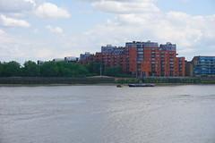 London_0458 (O En) Tags: london thames dog island river