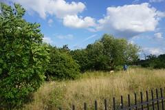 London_0483 (O En) Tags: london thames dog island river