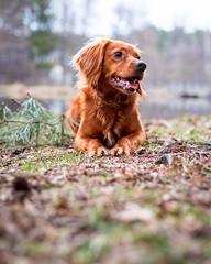 I can't believe autumn has creeped up on us already. The ground is covered with fallen leaves and the days have gotten so much shorter... Now that it's arrived though, let's embrace it and make the most of this season! • • • • • #hiking #camping #outdoors (watson_the_adventure_dog) Tags: i can't believe autumn has creeped up us already the ground is covered with fallen leaves days have gotten much shorter now that it's arrived though let's embrace it make most this season • hiking camping outdoors camp backpacking outdoor getoutside roadtrip wilderness hike tent dogoftheday mountain bushcraft campingwithdogs doglover trekking forest campvibes survival ilovemydog outdoorlife petstagram hikingwithdogs camplife camper pets puppylove boatwithdogs tongueouttuesday