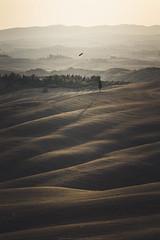 Flying over the desert #1 (Massimiliano Teodori) Tags: valdorcia tuscany landscape italy buteobuteo poiana