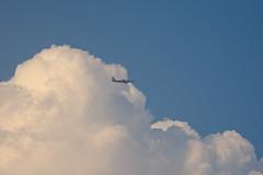 Air Asia (NA.dir) Tags: telephoto birds evening shootout nikon d7200 dslr flight