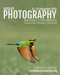 Birdlife (VS Images) Tags: birdlife photography biennialconference 2019 vsimages vassmilevski olympusinspired olympus olympusau getolympus m43 bif rainbowbeeeater meropsornatus swallowsinflight swallows birding birdsinflight feathers wildlife wildlifephotography australianbirds avian australianwildlife perth wa freemantle