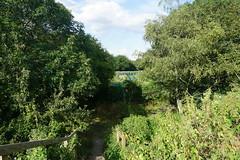 London_0486 (O En) Tags: london thames dog island river
