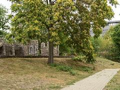 Buschkrug_e-m10_1019079112 (Torben*) Tags: rawtherapee olympusomdem10 olympusm25mmf18 berlin neukölln buschkrug spielplatz britz playground baum tree