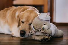 One pillow and two sleepy buddies (Inka56) Tags: crazytuesday toys dog floor pillow baddies cuteness fabuleuse teddybear