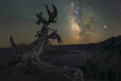 Ancient Whitebark Pine Under The Stars (Mike Ver Sprill - Milky Way Mike) Tags: whitebark pine milky way galaxy universe travel crater lake stars long exposure ioptron sky tracker tree water caldera volcano beautiful oregon night dark
