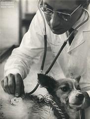 Médico veterinário, outubro de 1968 (Arquivo Nacional do Brasil) Tags: veterinário arquivonacional arquivonacionaldobrasil nationalarchivesofbrazil nationalarchives história animal animais