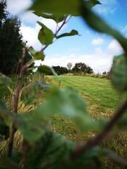 Lunchtime trip to Rosemount (UCD Staff Photography Club) Tags: ucd dublin ireland rosemount orchard flowers autumn fields