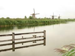 On The Rhine. (aitch tee) Tags: rhinegetaway cruise riverrhine vikingrivercruise touristviews august2019 windmills