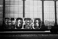 _DJS9432 (David Stebbing) Tags: grafitti blackandwhite flickr trains