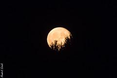 Mond I (HendrikSchulz) Tags: september teleconverter extender 2019 canonef70200f4lusm telekonverter canoneos7dmarkii canonef14xiii moon night dark mond nacht dunkel hendrikschulz hendriktschulz