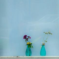 Two In Blue (TablinumCarlson) Tags: europa europe island iceland house leica m m240 summicron cron north atlantic akureyri norðurland eystra eyjafjörður fenster window blau blue vase flower blume weichzeichner quadrat square softfocus 90mm