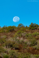 Morning Moonset (GoodLifeErik) Tags: moon morning sunny outside blue sky hillside socal sage moonset telephoto