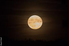 Mond I (HendrikSchulz) Tags: 2019 hendrikschulz mond september moon nacht night canonef14xiii canonef70200f4lusm canoneos7dmarkii extender telekonverter teleconverter hendriktschulz dark dunkel