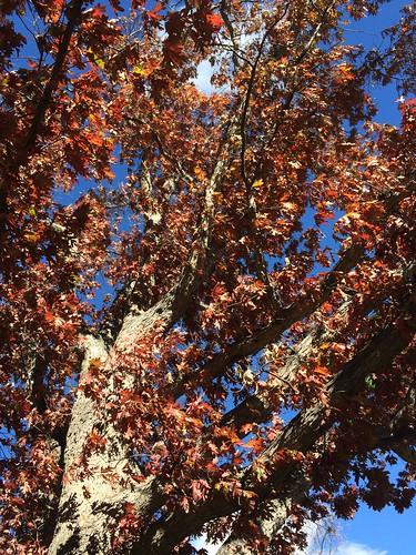 Photo - COB Forestry - white oak 6