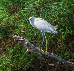 "Another egret • <a style=""font-size:0.8em;"" href=""http://www.flickr.com/photos/75865141@N03/48749901592/"" target=""_blank"">View on Flickr</a>"