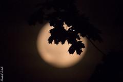 Mond II (HendrikSchulz) Tags: 2019 hendrikschulz mond september moon nacht night canonef14xiii canonef70200f4lusm canoneos7dmarkii extender telekonverter teleconverter hendriktschulz dark dunkel