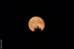 Mond II (HendrikSchulz) Tags: moon september teleconverter extender 2019 canonef70200f4lusm telekonverter canoneos7dmarkii canonef14xiii night dark mond nacht dunkel hendrikschulz hendriktschulz