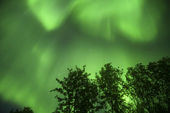 00308558 (Daniel John Benton) Tags: tromsdalen tromsø tromso troms nordnorge northernnorway norge norway europeaneconomicarea eea europe earth northernlights auroraborealis aurora trees valley forest woods wood night stars sony a7iii a7 arctic