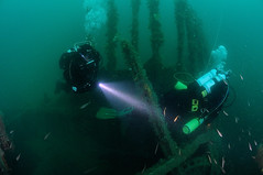 Scotland-201908-Orkney-Dive6-Brummer-11-DiversAtTheShot (Tony J Gilbert) Tags: orkneys scotland scubadiving orkneyislands marine diving marinefish nikond300 60mmlens 105mmlens underwater underwaterphotography travel travelogue scottishtravel scottishscubadiving scottishlandscapes scottishwildlife