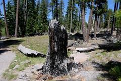 It Burnt (ivlys) Tags: usa california redding lassenvolcanicnationalpark feuer fire manzanitalake see lake kanadagänse canadageese tier animal landschaft landscape natur nature ivlys