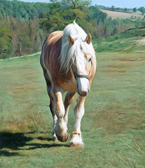 Draft Horse (scilit) Tags: horse farm draft drafthorse domesticanimal trees grass forest shadows fields farmanimal mane workhorse hooves whitemane creamcoloredhorse coth5 fence landscape hills equine pasture pastoral photothebestofmimamorsgroups