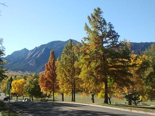 Photo - COB Forestry - Baldcypress North Boulder Pk