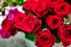 I couldn't refuse them, always irresistible. (Fnikos) Tags: rose rosa roses rosas flower flowers flor flores fiore fiori nature naturaleza natura natur red pink green color colour colores colours colors dark light shadow shadows dof depth depthoffield bokeh outside outdoor