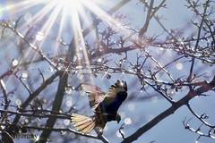 Mäusebussard (hjimmy schlüter) Tags: november canon september 2019 spannend bilder bussard fokus fotos wasser lichter sonne bäume sterne vögel mäusebussard entdecken fotomontage