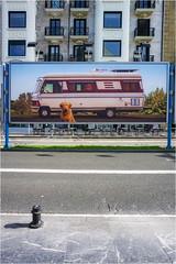 ... 67. Zinemaldia ... (Lanpernas .) Tags: ssff 2019 cine festivaldecine donostia zinemaldia septiembre carteles zurriola gros mercadotecnia filmfestival street perro chien dog