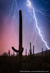 It's Electric (David Swindler (ActionPhotoTours.com)) Tags: arizona saguaro southwest bolt cacti cactus lightning monsoon saguaros storm sunset