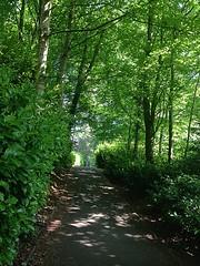 Summer path (BrooksieC) Tags: summer nature countryside parkland sirthomasandladydixon dunmurry belfast ireland northernireland