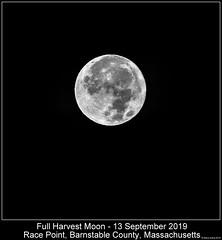 Full Harvest Moon (Steve Arena) Tags: racepointpoint rpp racepoint provincetown barnstablecounty massachusetts nikon d750 2019 bird birds birding