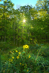 All Green On The Inside (Phil~Koch) Tags: beautiful hope love joy dramatic unity trending popular canon rural fineart arts shadow sun sunrise light peace wisconsin shadows endless earth sunlight horizon pastel summer forest woods yellow wildflowers flowers trees green
