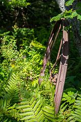 20190909-DSC_9406 (Douger S) Tags: d7200 landscape leaning maine nature nikon rim rust trees woodenboatschool