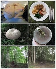 Chicken Dinner and a Walk in the Woods (genesee_metcalfs) Tags: collage summer august woods walk geneseecountyfairgrounds mushrooms fungi husband dinner chicken potatoes stuffing gravy beans