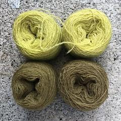 Carrot Tops (lady-ursula) Tags: wool thread naturaldye carrottops ecocolour warptwist naturaldyechallenge