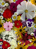 59868.01 Bouquet (horticultural art) Tags: horticulturalart bouquet flowers mixedflowers begonia rudbeckia impatiens anemone viola tanacetum hydrangea achillea monarda leucanthemum
