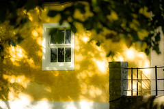 Shadow dance (tonguedevil) Tags: outdoor outside countryside summer building stable barn window wall tree leaves yellow colour light shadows sunlight