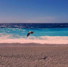 A flying bird (Ioannis Ks) Tags: sea beach bird rhodes sky clouds waves water seaside shore sand nature