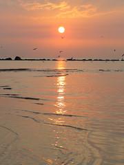 IMG_0101x (gzammarchi) Tags: italia paesaggio natura mare ravenna lidodidante alba sole animale uccello volo stormo riflesso monocrome