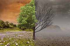 Present and future (Geraldas) Tags: ecology forest destroyed tree pollution last manipulation danger desert mountain meadow driedup
