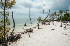 DSC_5178-Edit (wreckdiver1321) Tags: beach family fl florida gulf key landscape lovers mexico naples ocean park sand seascape state sun surf vacation