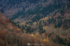 En un país multicolor (SantiMB.Photos) Tags: 2blog 2tumblr 2ig valdetoran valldaran valdaran pirineos pyrenees lleida otoño autumn bosque árboles trees colores colours colors forest valle valley geo:lat=4281910606 geo:lon=080975182 geotagged santjoandetoran cataluna españa