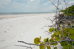 DSC_5128-Edit (wreckdiver1321) Tags: beach family fl florida gulf key landscape lovers mexico naples ocean park sand seascape state sun surf vacation