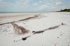 DSC_5124-Edit (wreckdiver1321) Tags: beach family fl florida gulf key landscape lovers mexico naples ocean park sand seascape state sun surf vacation