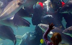 Encounters / Begegnungen (Zoom58.9) Tags: people human diver child fish wellcome menschen personen taucher kind fisch begrüsung aquarium canoneos50d canon