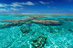 20190911-52-Coral at thrid snorkelling location (Roger T Wong) Tags: 2019 aitutaki cookislands pacific pacificisland rogertwong sel24105g sony24105 sonya7iii sonyalpha7iii sonyfe24105mmf4goss sonyilce7m3 blue coral holiday isalnd lagoon sand sea sky travel water white