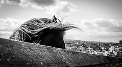 Whitby . (wayman2011) Tags: colinhart fujifilmxe2s lightroom5 wayman2011 bwlandscapes mono coast horses 7artisan25mmf18 northyorkshire whitby uk